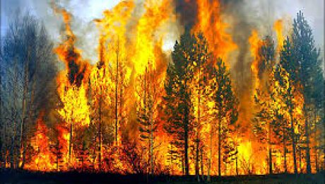 Wooded Area on Fire