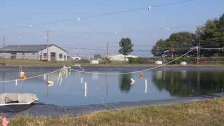 USGS Asian Carp Pond