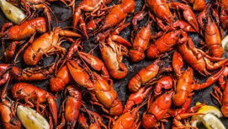 Eating Invasive Crayfish