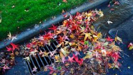 Leaves in Storm Drain